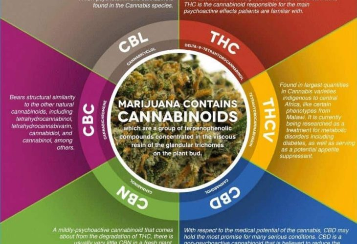Cannabinoid Picture